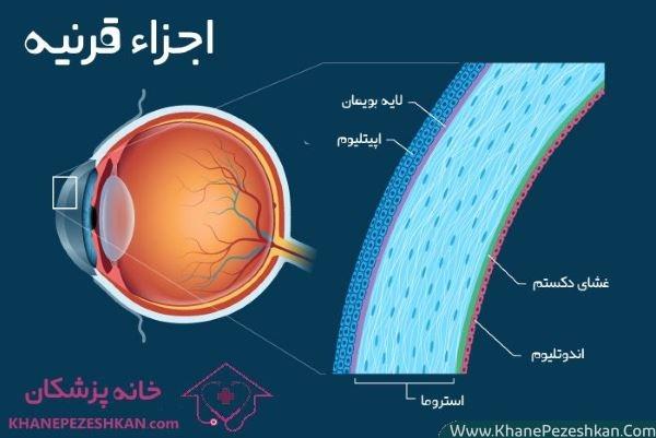 قرنیه چشم چیست؟ هر آنچه که باید در مورد آناتومی و ساختار قرنیه بدانید